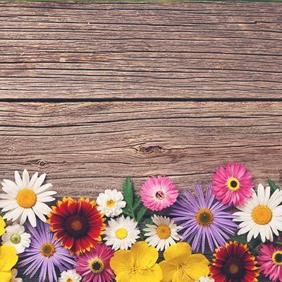 Subfamilia Floral